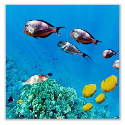 Üveg - kép infrapanel Sea 2 (300 W) Új termék!