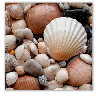 Üveg - kép infrapanel Shells (300 W) Új termék!